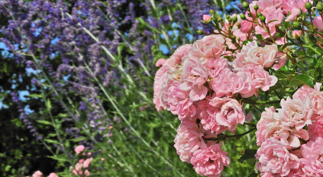 jardin_vivace_murs_en_pierres_seches_3
